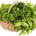 Mom Tip: Frozen Herb Cubes