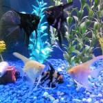 Setting Up an Aquarium for Children