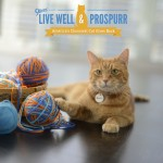 Live Well & Prospurr and WIN a Morris the Cat Prize Package #MorrisFeeds #ProspurrPromo