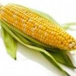 MOM Tip: Sweet Corn
