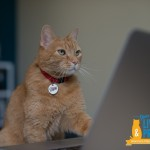 Move over, Dear Abby… 9Lives' Morris the Cat is Here to Reveal Advice