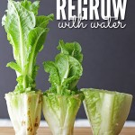 MOM Tip: 10 Foods Regrow in Water Alone