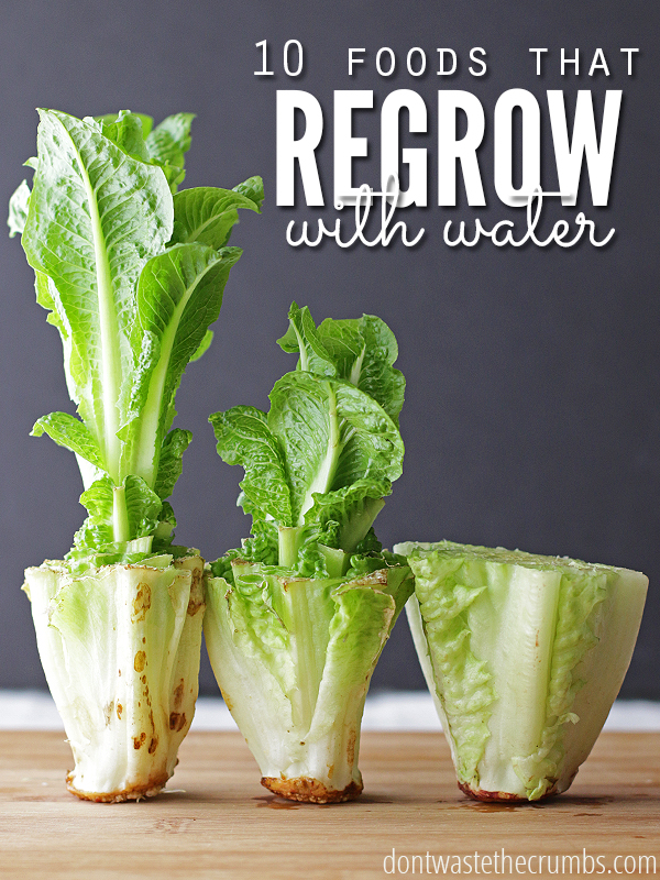 Foods-that-Regrow-in-Water_Cover