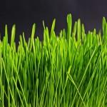Loving My Lawn All Year Long #ILoveMyLawn