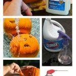 MOM Tip: 5 Tips for Preserving Carved Pumpkins