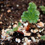 MOM Tip: Sprinkle Eggshells Around Your Plants