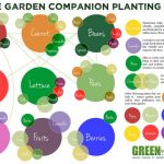 MOM Tip: Companion Planting Tips