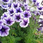MOM Tip: 8 Plants That Repel Bugs & Mosquitoes