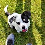 Amazing tips that will make puppy potty training much easier!