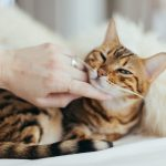 Top Tips to Keeping Your Pet Healthy