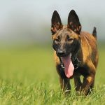 Common Issues with Your Dog's Skin
