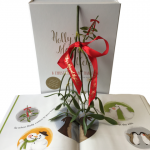 WIN – Holly's Magical Mistletoe – A Christmas Kissing Tradition ~ 25 Days of Christmas