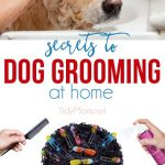 Secrets to Dog Grooming at Home