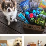 MOM Deal: BarkBox $5.00 Valentine's Box