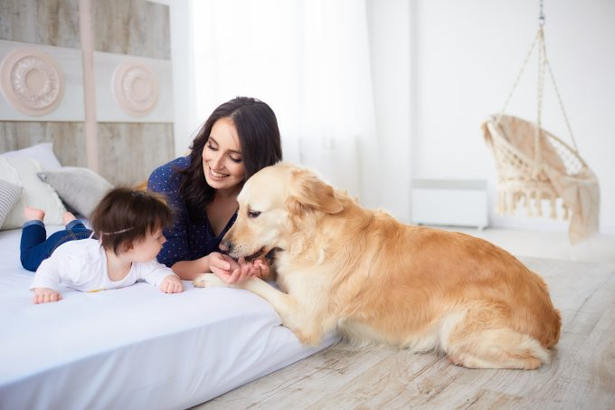 How To Introduce A New Dog To Your Children